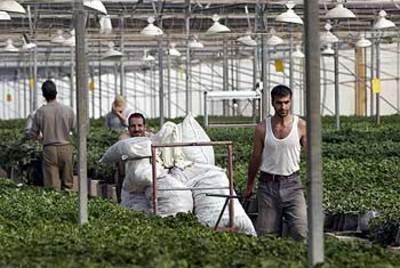 Gush_greenhouse_netzer_hazani